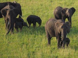 Alt tag not provided for image https://www.airfarewatchdog.com/blog/wp-content/uploads/sites/26/2014/04/elephantsafari-300x225.jpg