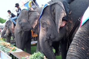 Alt tag not provided for image https://www.airfarewatchdog.com/blog/wp-content/uploads/sites/26/2014/11/elephanteats-300x198.png