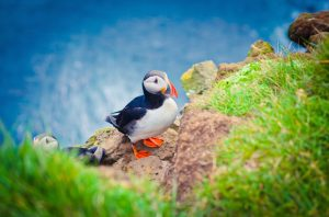 Alt tag not provided for image https://www.airfarewatchdog.com/blog/wp-content/uploads/sites/26/2014/12/icelandpuffin-300x198.jpg