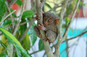 Alt tag not provided for image https://www.airfarewatchdog.com/blog/wp-content/uploads/sites/26/2016/02/tarsier-300x198.jpg