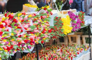 Alt tag not provided for image https://www.airfarewatchdog.com/blog/wp-content/uploads/sites/26/2016/06/tulips-300x198.jpg