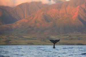 Alt tag not provided for image https://www.airfarewatchdog.com/blog/wp-content/uploads/sites/26/2018/01/mauiwhale-300x198.jpg
