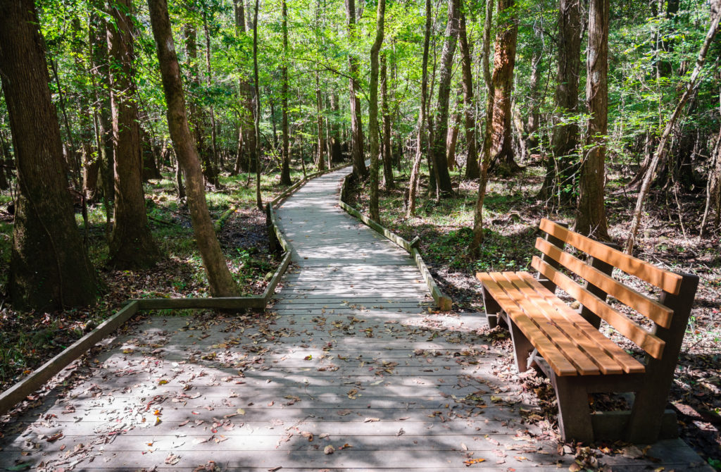 Pathway in Congaree National Park