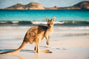 Alt tag not provided for image https://www.airfarewatchdog.com/blog/wp-content/uploads/sites/26/2019/01/Australia-Kangaroo-Beach-Shutter-300x200.jpg