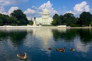 Alt tag not provided for image https://www.airfarewatchdog.com/blog/wp-content/uploads/sites/26/2019/01/Washington-DC-Capitol-Ducks-300x200.jpg
