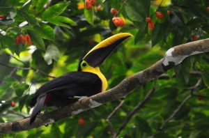 Alt tag not provided for image https://blog.airfarewatchdog.com/uploads/sites/26/2015/05/toucanliberia-300x198.jpg