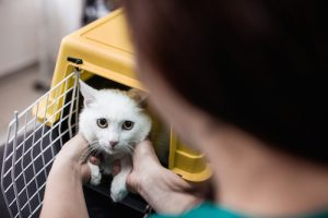 Alt tag not provided for image https://blog.airfarewatchdog.com/uploads/sites/26/2017/02/catkennel-300x200.jpg