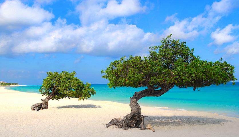 Divi Divi trees on Eagle Beach in Aruba