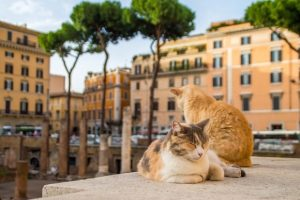 Alt tag not provided for image https://blog.airfarewatchdog.com/uploads/sites/26/2018/08/rome_cats_shutter-300x200.jpg