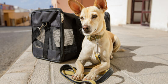 Small dog sitting beside pet carrier on sidewalk
