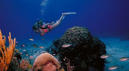 st. croix us virgin islands caribbean scuba diving