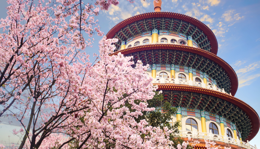 temple and cherry blossoms in Taipei Taiwan