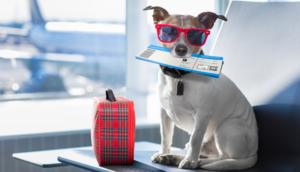 Alt tag not provided for image https://blog.airfarewatchdog.com/uploads/sites/26/2019/08/Dog-Airplane-FlightTickets-Pet-Travel-300x172.png
