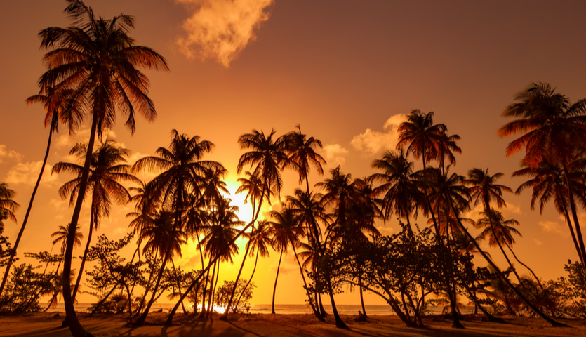 silhouette of plam trees in trinidad and tobago