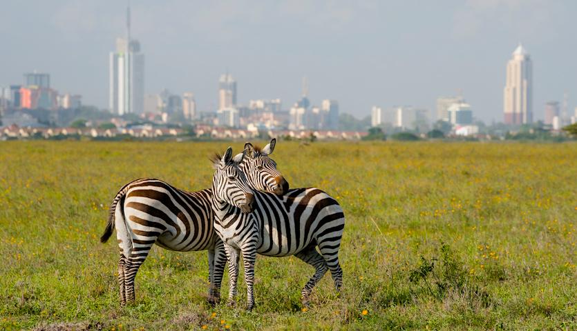 Zebras near Nairobi Kenya