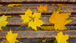 Alt tag not provided for image https://blog.airfarewatchdog.com/uploads/sites/26/2019/11/Airplane-leaf-leaves-autumn-fall-silhouette-300x172.png