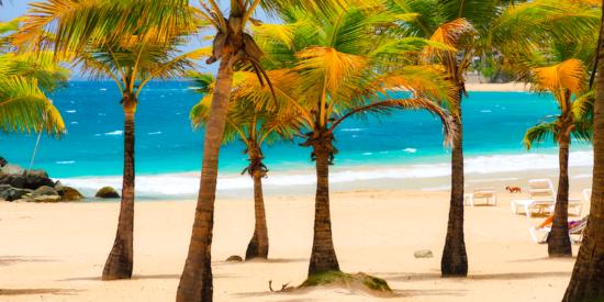 Beach near San Juan puerto rico with palm trees