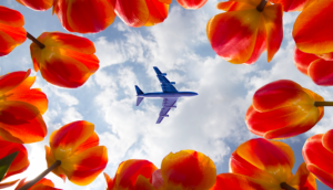 Alt tag not provided for image https://blog.airfarewatchdog.com/uploads/sites/26/2020/01/Airplane-flowers-spring-wn-southwest-generic-300x172.png